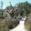 Walk on trail